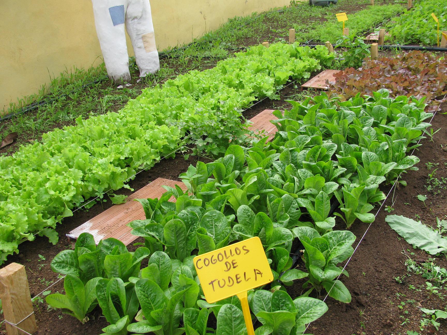 Ceiplopedeguerra licensed for non commercial use only for Que plantas se siembran en un huerto